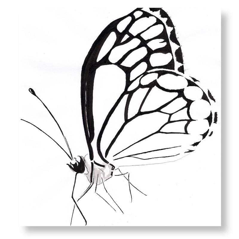 VisueliserenIllustratieVlinderZW1