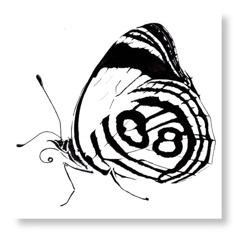 VisueliserenIllustratieVlinderZW4